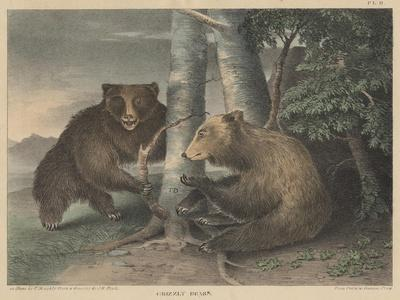 Grizzly Bears-J. R. Peale-Giclee Print