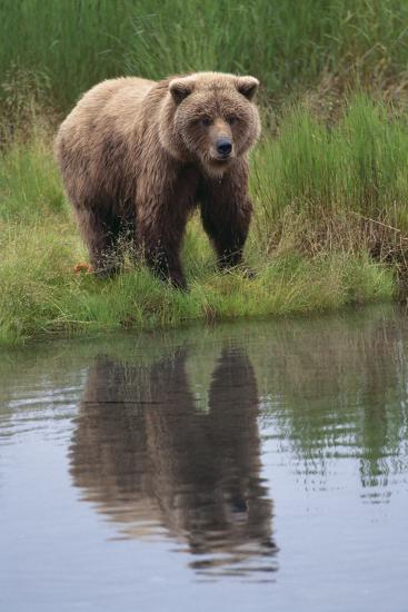 Grizzly by Stream-DLILLC-Photographic Print