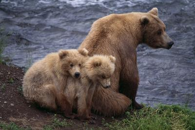 https://imgc.artprintimages.com/img/print/grizzly-cubs-with-mother-by-river_u-l-pzqzmp0.jpg?p=0