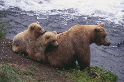 https://imgc.artprintimages.com/img/print/grizzly-cubs-with-mother-by-river_u-l-pzr0050.jpg?p=0