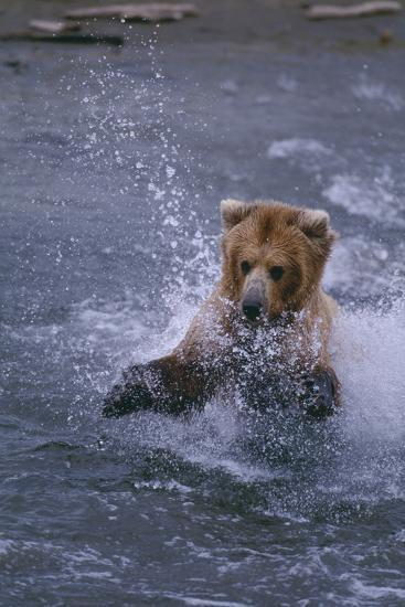 Grizzly Splashing in Water-DLILLC-Photographic Print
