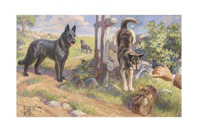 Groenendael and Malinois Dogs Work as Herders and Couriers-Edward Herbert Miner-Giclee Print
