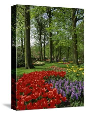Tulips and Hyacinths in the Keukenhof Gardens at Lisse, the Netherlands, Europe