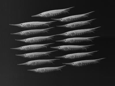 Grooved Razorfish-Sandra J^ Raredon-Photographic Print