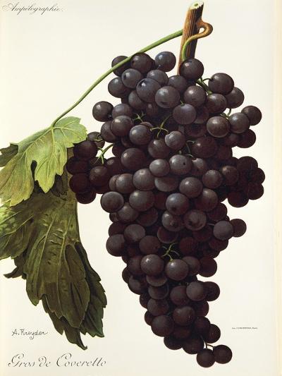 Gros De Coveretto Grape-A. Kreyder-Giclee Print