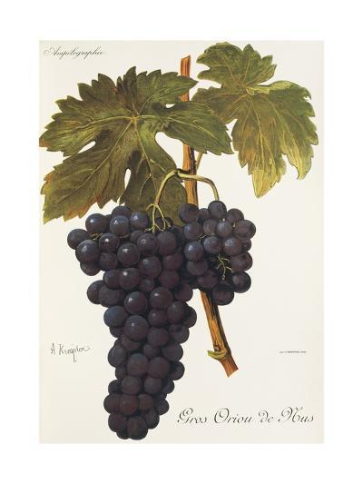 Gros Oriou De Mus Grape-A. Kreyder-Giclee Print