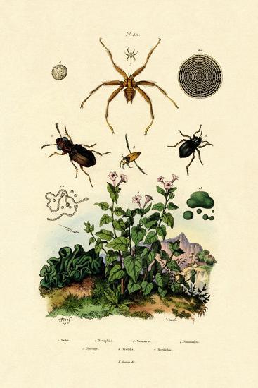 Ground Beetle, 1833-39--Giclee Print