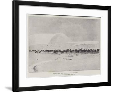 Group of Deer in a Ross-Shire Forest in Winter--Framed Giclee Print