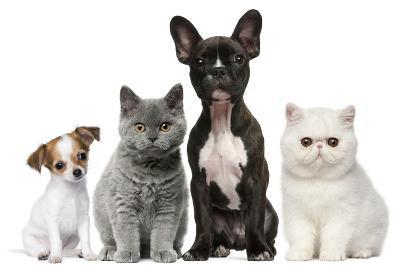 Group of Dogs and Cats in Front of White Background-Life on White-Photographic Print