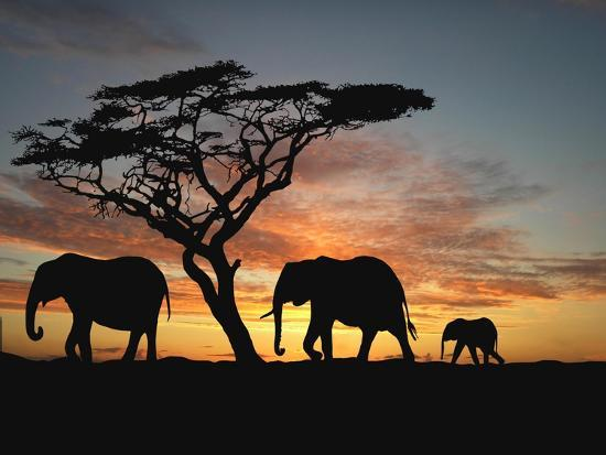 Group of Elephant in Africa-TebNad-Art Print