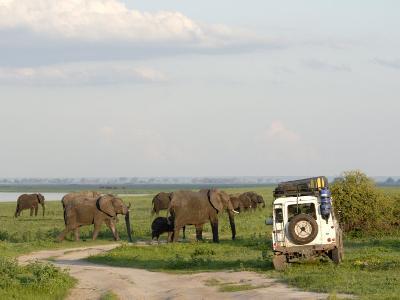 Group of Elephants and Landrover, Chobe National Park, Botswana, Africa-Peter Groenendijk-Photographic Print