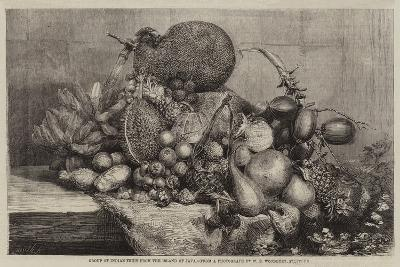 Group of Indian Fruit from the Island of Java--Giclee Print