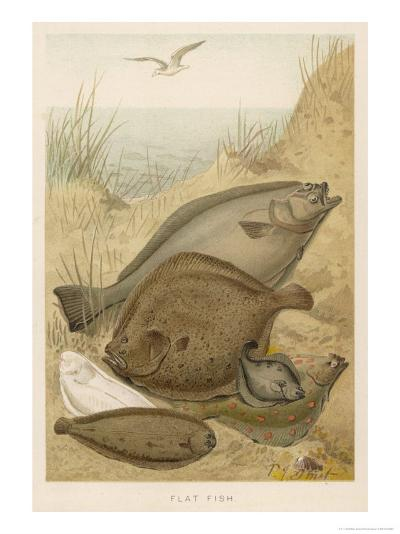 Group of Mixed Flat Fish: Halibut Turbot Flounder Plaice and Sole-P. J. Smit-Giclee Print