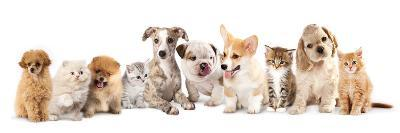 Group of Puppies and  Kitten of Different Breeds, Cat and Dog-Lilun-Photographic Print