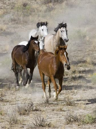 https://imgc.artprintimages.com/img/print/group-of-wild-horses-cantering-across-sagebrush-steppe-adobe-town-wyoming-usa_u-l-q10o2pd0.jpg?artPerspective=n