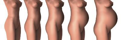 Growth of Female Midsection During Pregnancy Stages-Stocktrek Images-Art Print