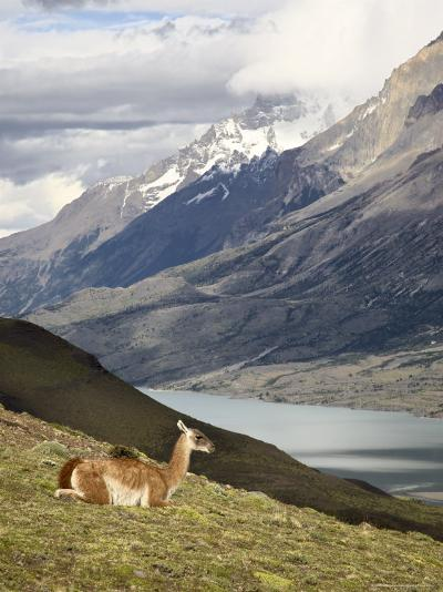 Guanaco (Lama Guanicoe) with Mountains and Lago Nordenskjsld in Background, Chile, South America-James Hager-Photographic Print