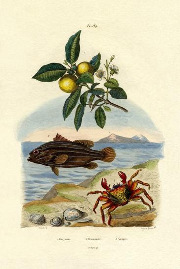 Guava, 1833-39--Giclee Print