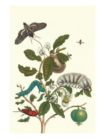 Guava and Tobacco Hornworm and a Podalia Moth-Maria Sibylla Merian-Art Print