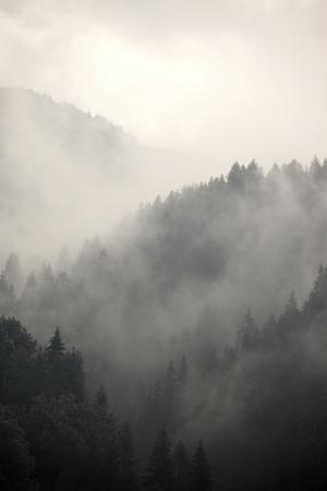 Fog Covering The Mountain Forests by Gudella