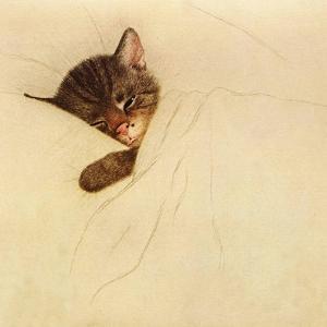 Sleep Like a Kitten by Guido Gruenwald