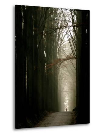 Foggy Path with Trees