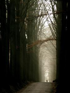 Foggy Path with Trees by Guillaume Carels