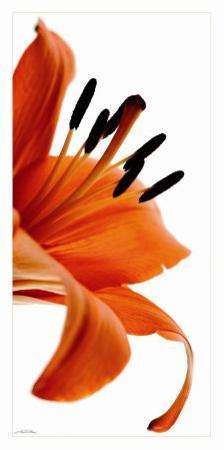 Fleur de Lys by Guillaume Plisson