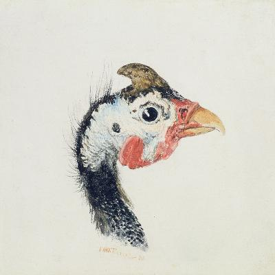 Guinea Fowl, from the Farnley Book of Birds, C.1816-J^ M^ W^ Turner-Giclee Print