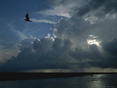Gull Flies above Oyster Bayou-James P^ Blair-Photographic Print