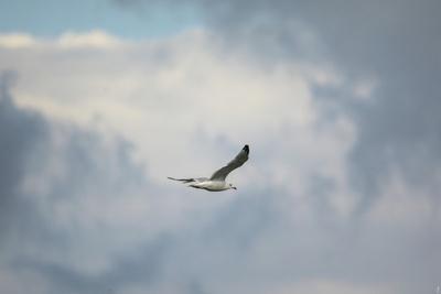 https://imgc.artprintimages.com/img/print/gull-over-paris-landing_u-l-pu0msf0.jpg?p=0