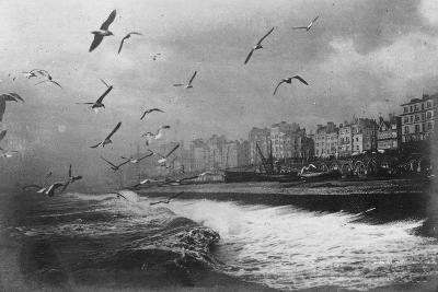 Gulls at Brighton, East Sussex, Early 20th Century--Giclee Print