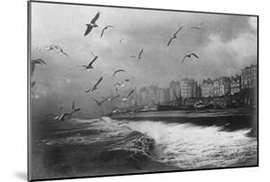 Gulls at Brighton, East Sussex, Early 20th Century