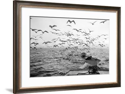 Gulls Chasing Behind 1960-A. Aubrey Bodine-Framed Photographic Print