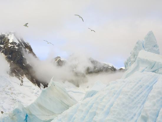 Gulls Flying Above Stranded Icebergs at Boothe Island-John Eastcott & Yva Momatiuk-Photographic Print