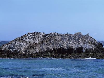 Gulls Off the California Coast-Carol Highsmith-Photo