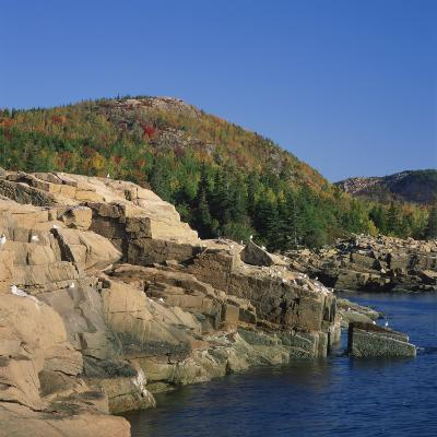 Gulls on Rocks Along the Coastline, in the Acadia National Park, Maine, New England, USA-Roy Rainford-Photographic Print