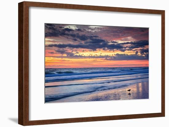 Gulls on the Shore II-Alan Hausenflock-Framed Photo