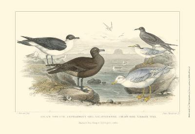 Gulls & Terns-Julius Stewart-Art Print