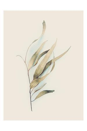 https://imgc.artprintimages.com/img/print/gum-leaves_u-l-q1g7v7w0.jpg?p=0