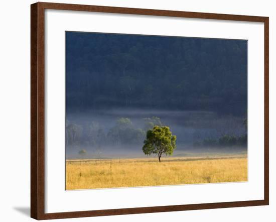 Gum Tree, Kosciuszko National Park, New South Wales, Australia, Pacific-Schlenker Jochen-Framed Photographic Print