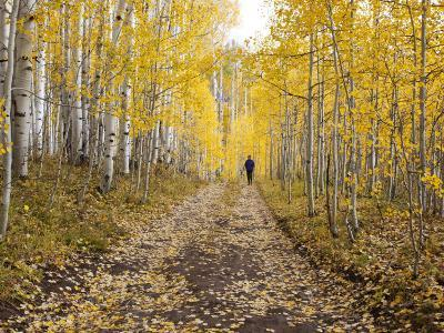 Gunnison National Forest, Colorado, USA-Jamie & Judy Wild-Photographic Print