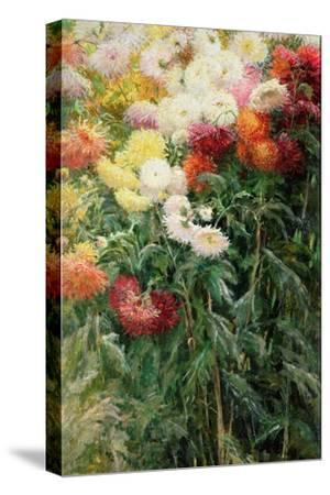 Clump of Chrysanthemums, Garden at Petit Gennevilliers, 1893