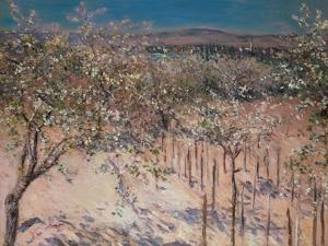 Orchard with Flowering Apple Trees, Colombes by Gustave Caillebotte