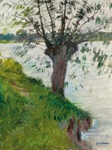 Willow by the River; Saule Au Bord De La Riviere, C. 1891 by Gustave Caillebotte