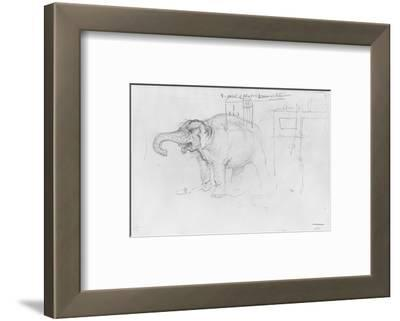 Album of the Siege of Paris, Elephant (Pen and Brown Ink Wash and Pencil on Paper)