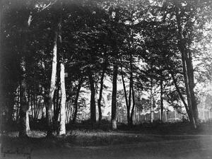 Fontainebleau, 1849 - Study of Trees and Pathways by Gustave Le Gray