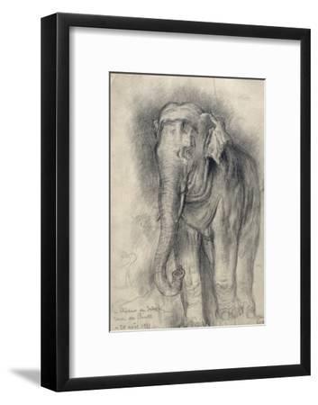 Eléphant sur le vif