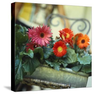 Gutter Planted with Gerberas