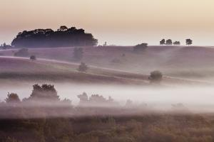 Heathland at Dawn, with Flowering Heather (Erica), Linwood, New Forest National Park, Hampshire, UK by Guy Edwardes